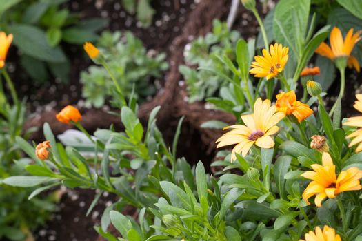 Fresh Orange Flowers with a shallow depth of field.