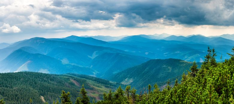Blue mountains covered with green forest. Panorama view of peaks ridge