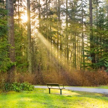 Bench in the green city park with shining sun and rays