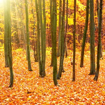 Autumn in beautiful sunny park with orange, yellow and red leaves