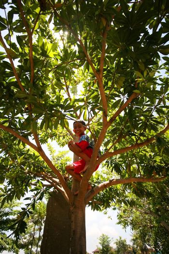Bali, Indonesia - October 23, 2007: asian cheerful little boy sits on a tree on the island of Bali in Indonesia
