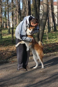 Joyful and happy Akita Inu meeting its friend in public park