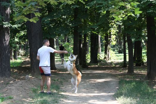 Happy dog Akita playing with his owner in public park