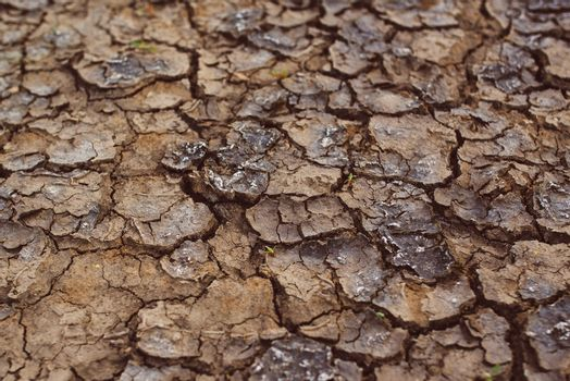 Drought, mud cracks in dry cultivated land