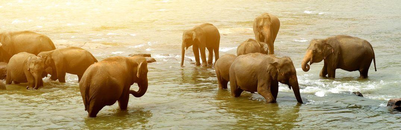 Big bathing elephants