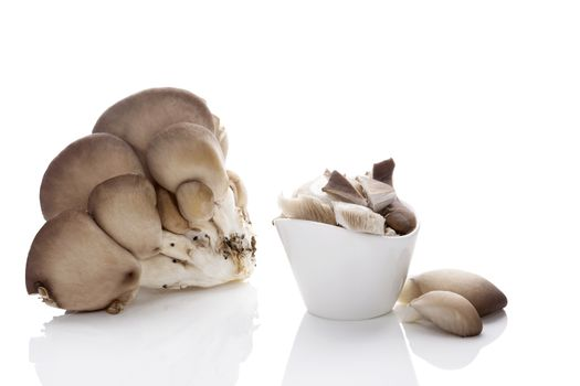 Fresh oyster mushrooms isolated on white background.