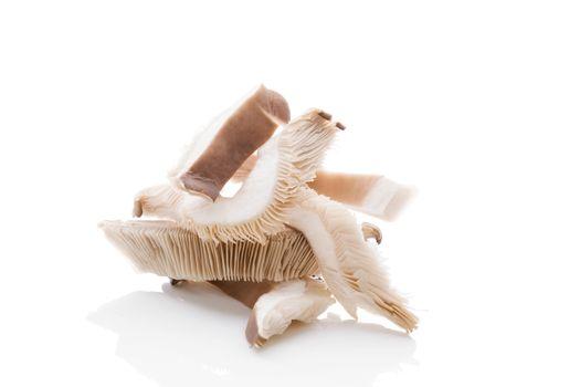 Fresh oyster mushrooms.