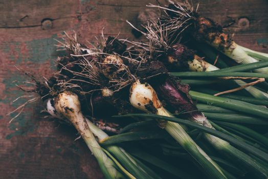 Freshly picked spring onion on table