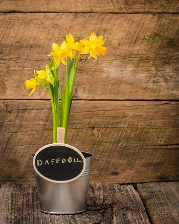 Daffodil and Sign