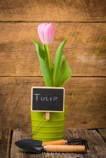 Tulip and Sign