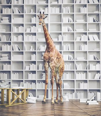 giraffe in the room with book shelves. Creative photo combination concept
