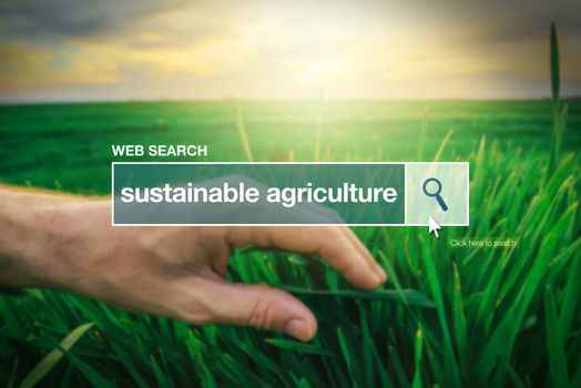 Sustainable agriculture - web search bar glossary term