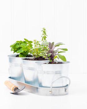 Indoor Herb Garden Portrait