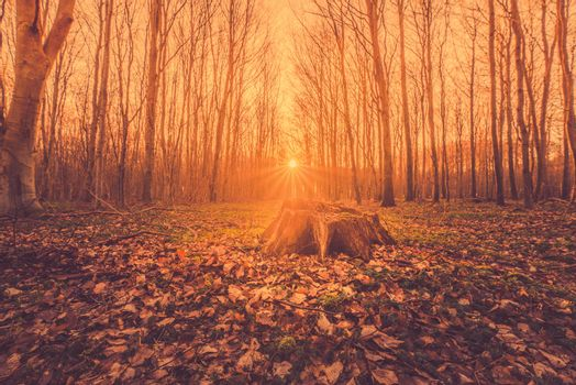 Fairytale sunrise in a forest