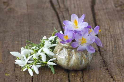 crocus and snowdrops on the wooden table