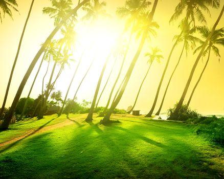 Bright sun over field