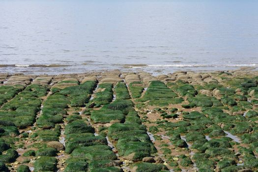 Stony coastal strip with straight stones and seaweed