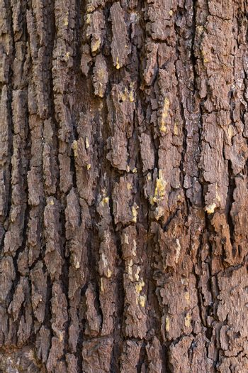 The surface of the bark