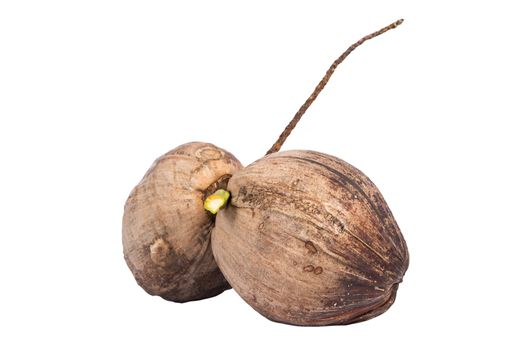 Two raw coconuts