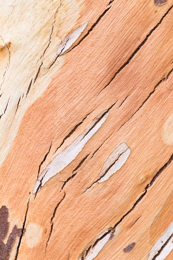 The surface of the eucalyptus trees.