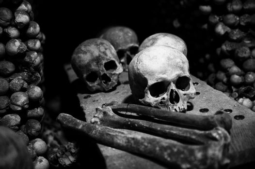 collection of skull and bones