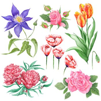Watercolor Botanical Illustrations of Summer Flowers