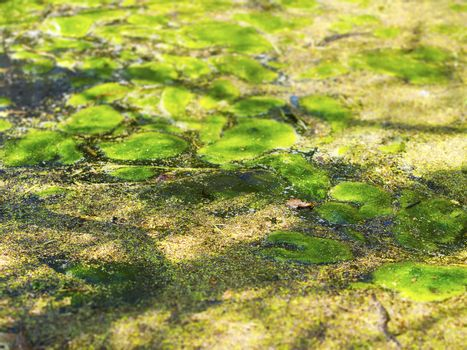 Pond with moss