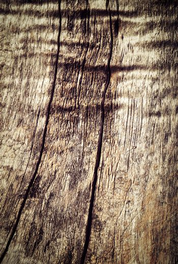 Two cracks on an old tree trunk