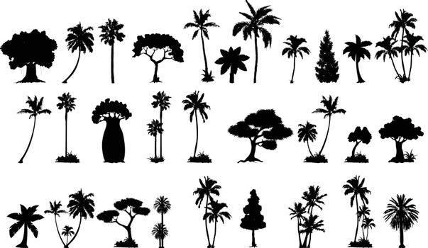 palm tree silhouette collections