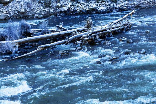Winter Leaves Snow Ice  Wenatchee River Valley Leavenworth