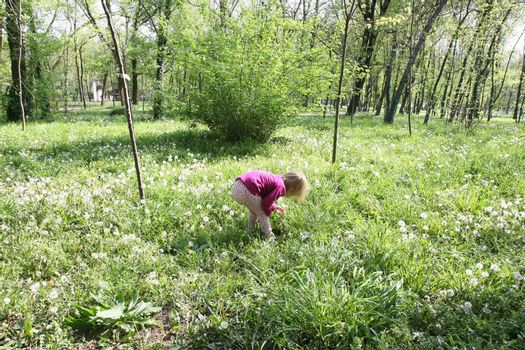 Young girl in the playing in the meadow of  dandelion