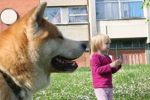 Young girl and dog standing in the the meadow of dandelion