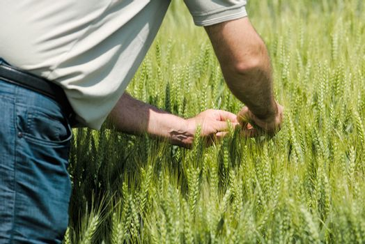 Wheat crop protection and responsible cereal grains farming