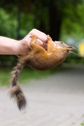 The photograph shows a squirrel sitting on a hand
