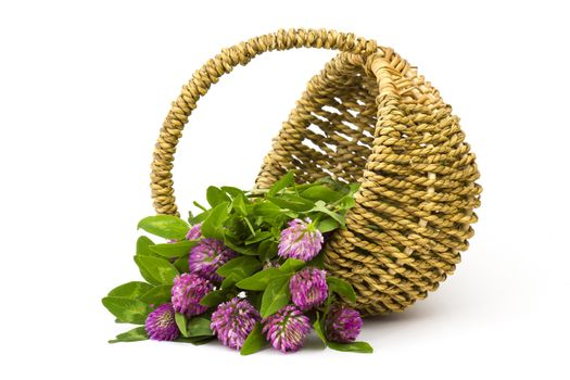 basket with clover on white background