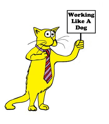 Cat holding 'Working Like A Dog' sign