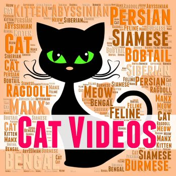 Cat Videos Indicating Cats Kitty And Movies