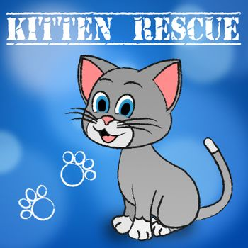 Kitten Rescue Showing Recovering Pets And Pet
