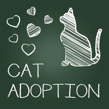 Cat Adoption Indicating Felines Pet And Pedigree