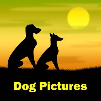 Dog Pictures Meaning Countryside Photograph And Nighttime
