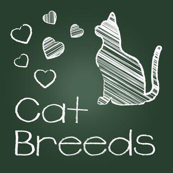 Cat Breeds Indicating Breeding Pet And Reproducing