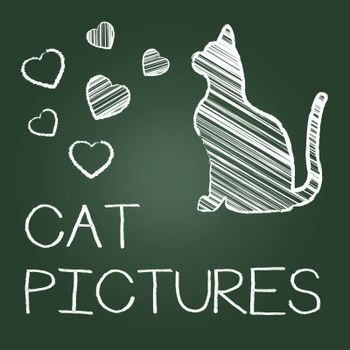 Cat Pictures Indicating Photo Pet And Pedigree