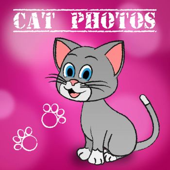 Cat Photos Meaning Cameras Pictures And Snapshots