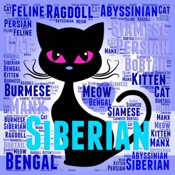 Siberian Cat Representing Breeding Puss And Breed