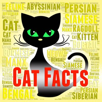 Cat Facts Meaning Information Pedigree And Pet