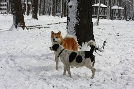 Dogs enjoying  in the forest under the snow