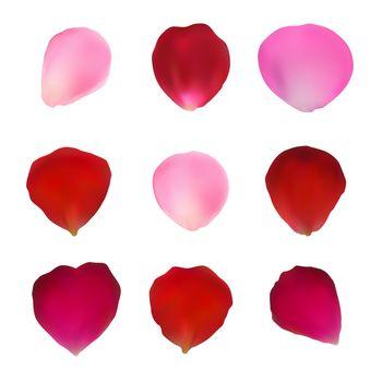 Set of rose petals. Red and pink rose petals. Rose petals for design. Vector illustration.