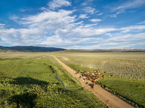 ranch road and cattle near Walden, North Park, Colorado - early summer aerial view