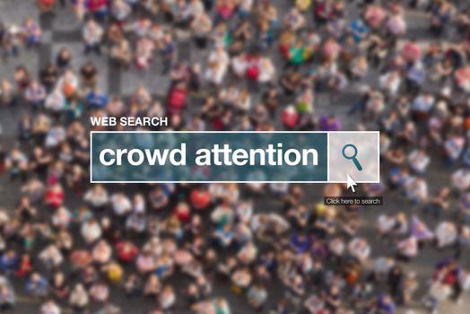 Crowd attention web search box