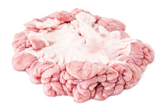 internal organs of pig.